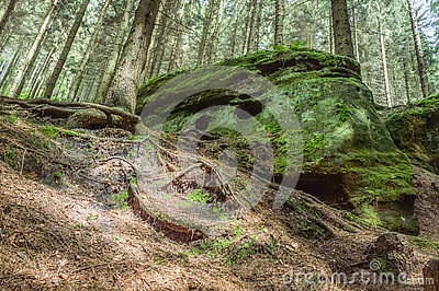 A Natural Rock Formation In The Centre Of Dense Forest Stock Photo.