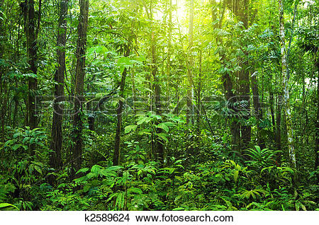 Stock Photo of Dense forest. k2589624.