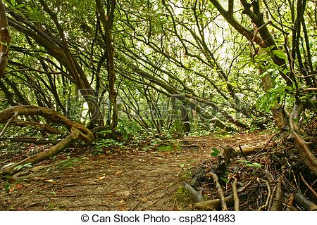 Stock Photos of Ominous dense rain forest thicket csp8214983.