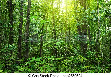 Stock Photo of Dense forest..