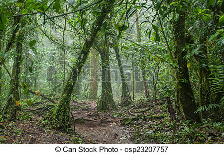 Stock Images of Eerie Costa Rica Jungle.