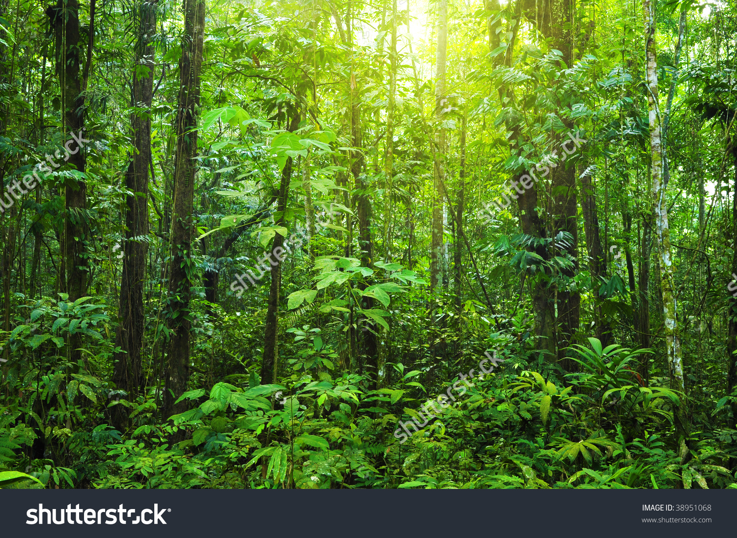 Dense Forest Tropical Dense Forest Morning Stock Photo 38951068.