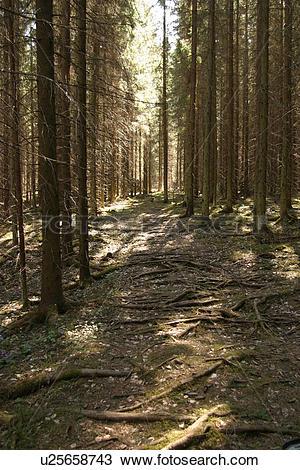 Stock Photo of growth, dense, dense growth, natural, outdoors.