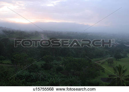 Pictures of green, wilderness, growth, dense, dense growth, trees.