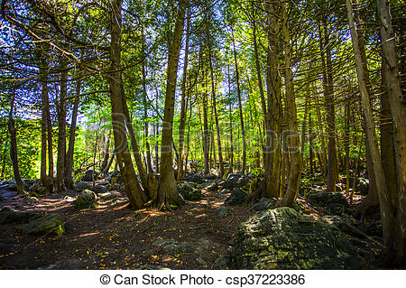 Pictures of In dense green forest view csp37223386.
