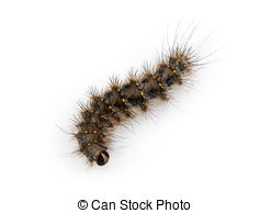 Hairy caterpillar Images and Stock Photos. 1,125 Hairy caterpillar.