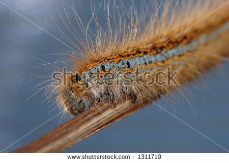 """""""furry Caterpillar"""" Stock Photos, Royalty."""