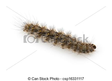 Stock Photography of Hairy Caterpillar with dense tufts of black.