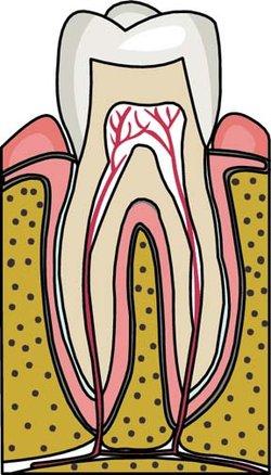 Dentin.