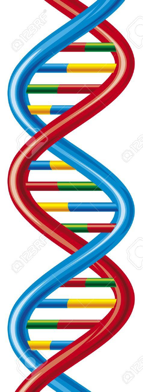 Vector DNA Strand Scheme Deoxyribonucleic Acid Royalty Free.