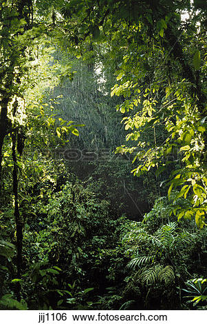 Stock Images of Begining of tropical rainstorm in rainforest in.