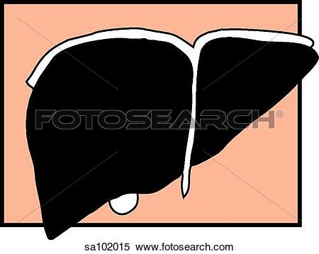 Stock Illustration of Graphic depiction of the liver. sa102015.