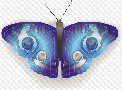 Mariposa clipart PNG y PSD (fondo transparente.