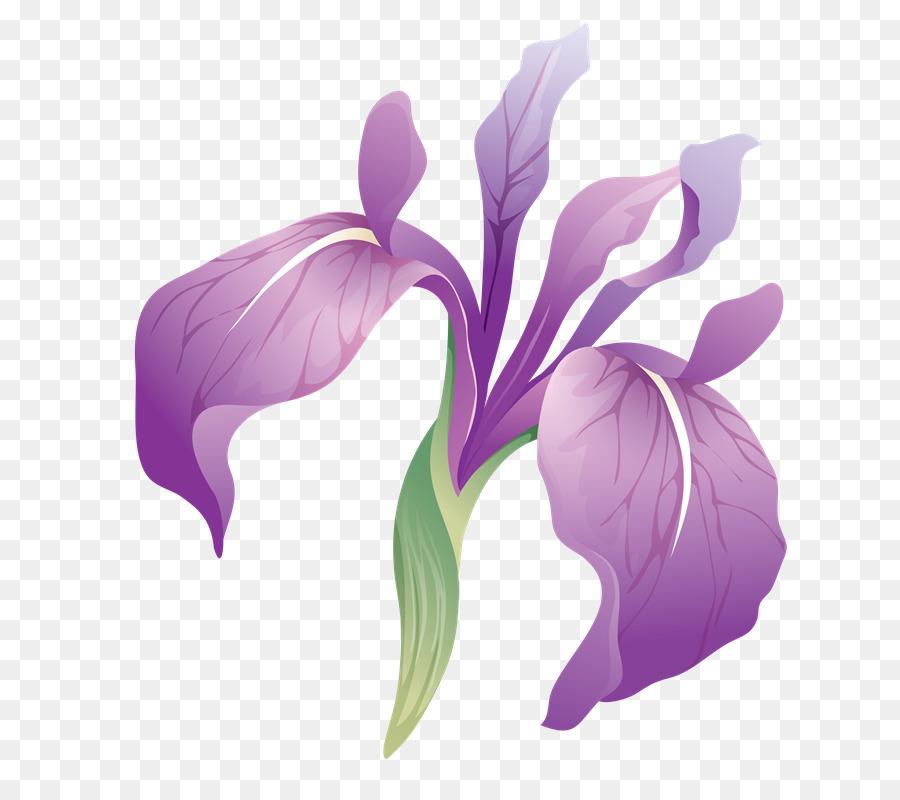 Iris, Photoscape, Gimp imagen png.