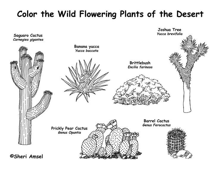 17 Best ideas about Biome Desert on Pinterest.
