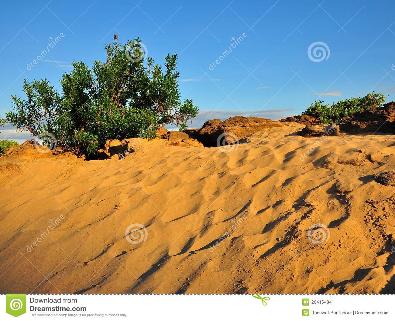 Desert Shrub Clipart.