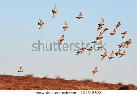 Desert Bird Stock Photos, Royalty.