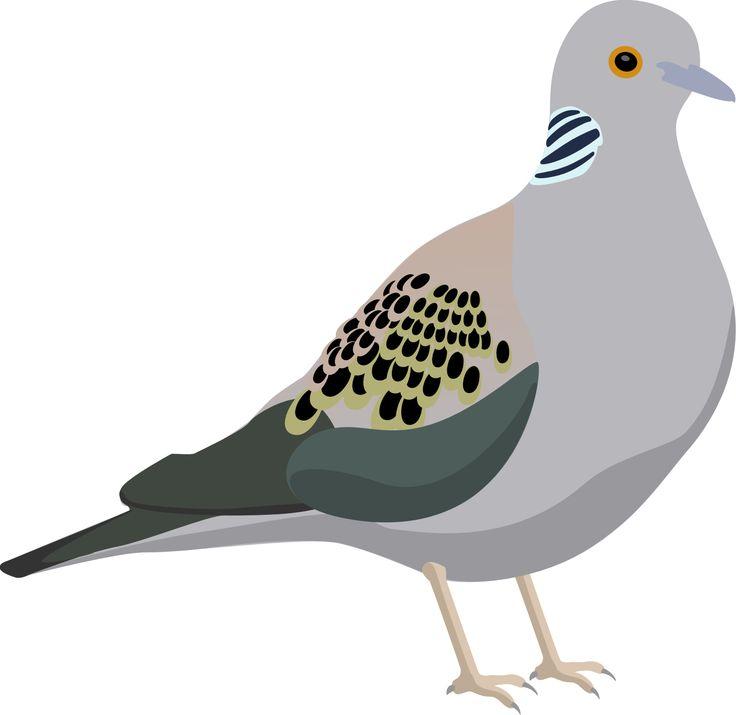 1000+ ideas about Turtle Dove on Pinterest.