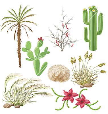 Desert plants vector by Val_Iva.