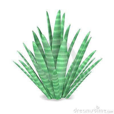 Desert plant clip art.