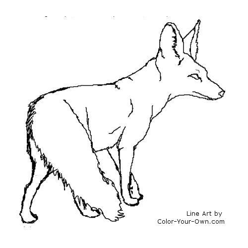 Desert fox drawing.