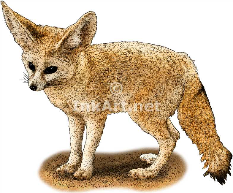 1000+ images about Illustrations of Foxes on Pinterest.