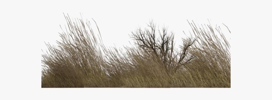 Dry Grass Clipart Desert Bush.