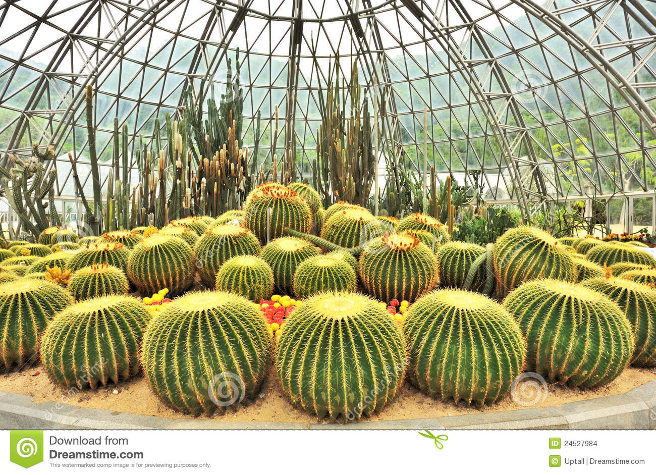 Greenhouse Of Desert Plants Stock Images.