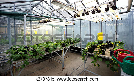 Greenhouse Stock Photos and Images. 37,596 greenhouse pictures and.