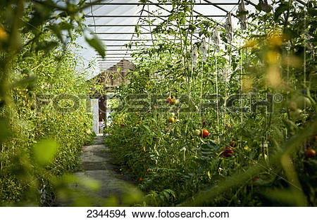 Hydroponic farming Stock Photos and Images. 3,668 hydroponic.