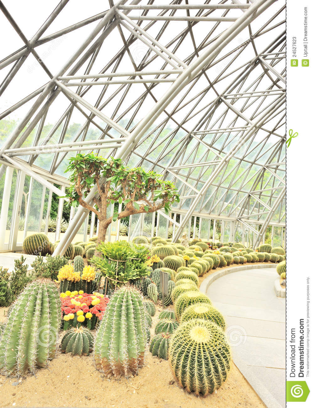 Desert Plants Greenhouse Stock Photos.