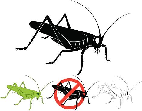Desert Locust Clip Art, Vector Images & Illustrations.