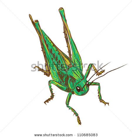Desert Locust Stock Photos, Royalty.