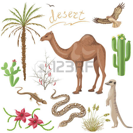 6,651 Desert Plants Stock Vector Illustration And Royalty Free.
