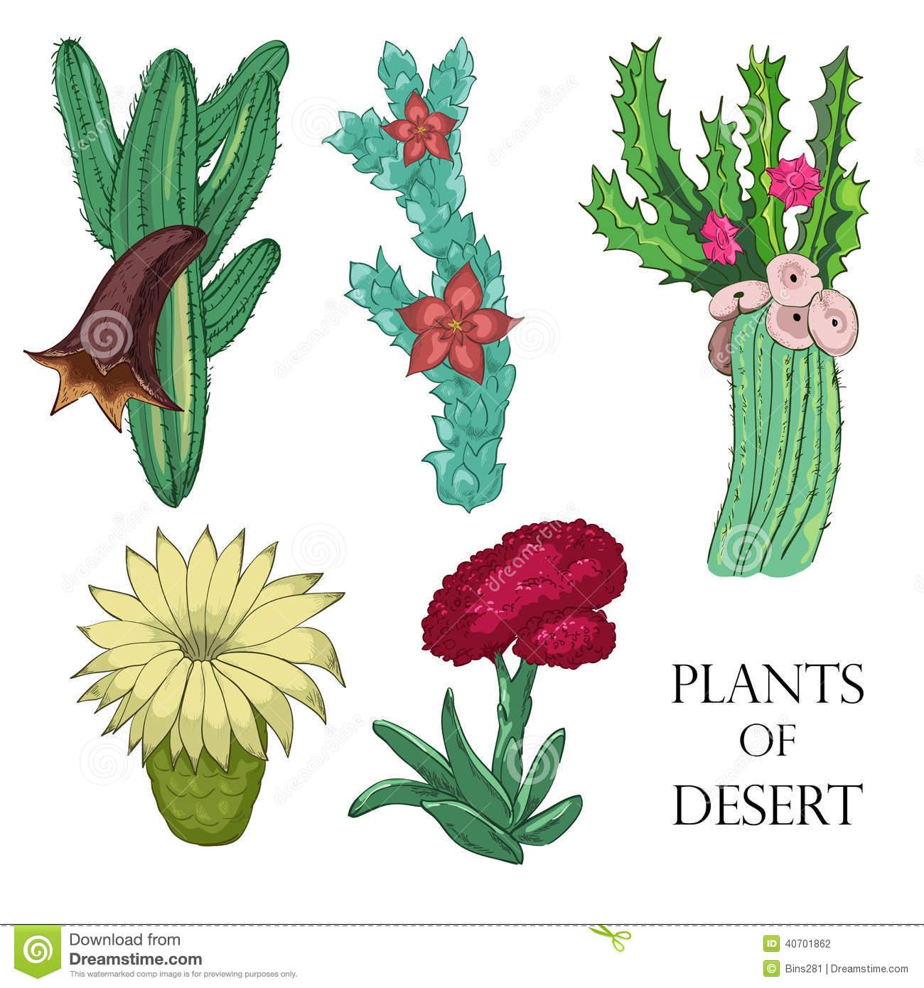 Desert Plants Clip Art.
