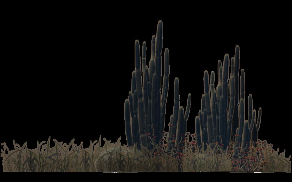 Desert Plants (4) by wolverine041269.deviantart.com on @DeviantArt.