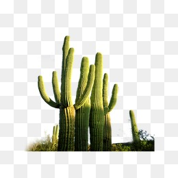Desert Plant Png (110+ images in Collection) Page 3.