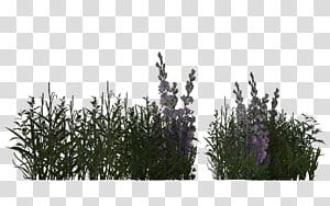 Desert Plants transparent background PNG cliparts free download.