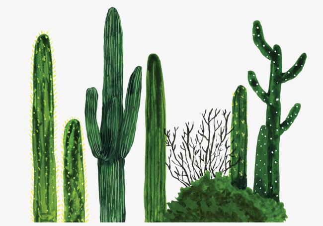 Cactus, Plant, Desert Plants, Illustrati #628.