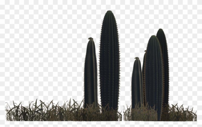 Photo Desert Plants 6 By Wolverine041269.
