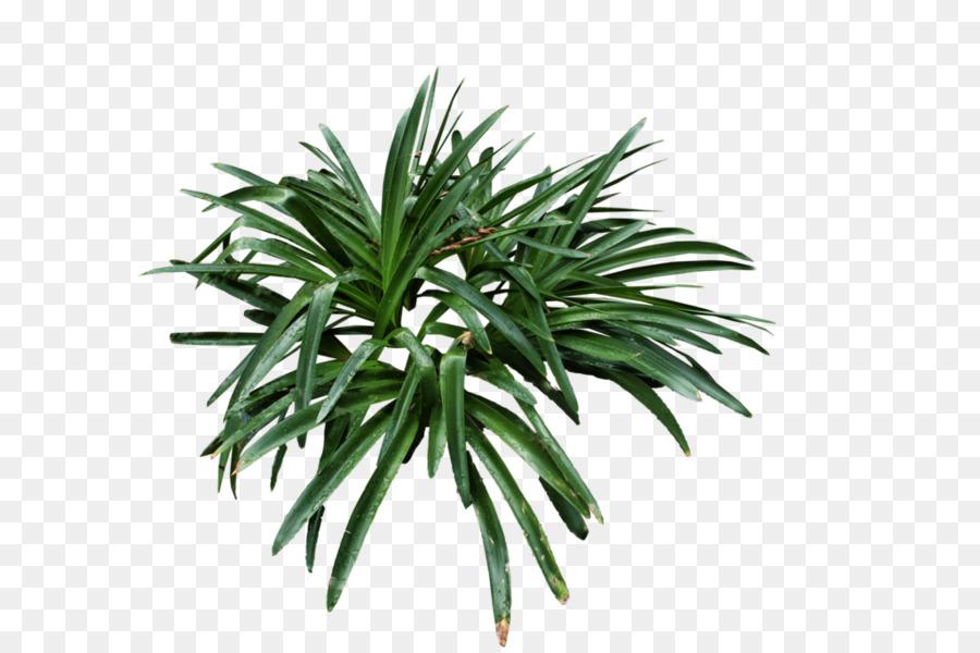 Desert Plants Png & Free Desert Plants.png Transparent Images #33810.