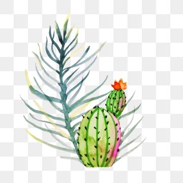 Desert Plants PNG Images.