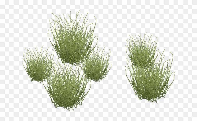 Desert Grass Png.