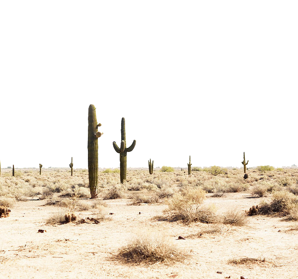 Download Free png Desert PNG Transparent Image.