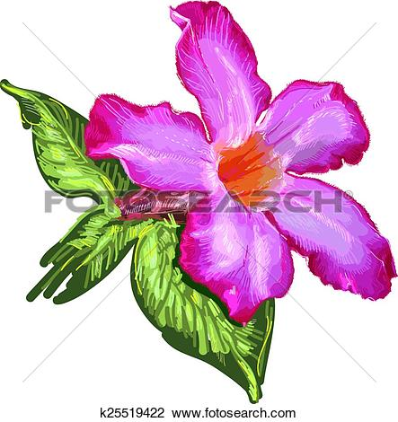 Clipart of Adenium Desert Rose flower and leaves. Sketch on a.
