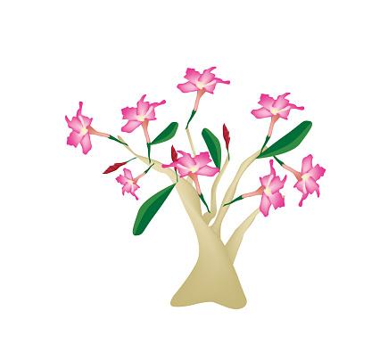Desert Rose Clip Art, Vector Images & Illustrations.