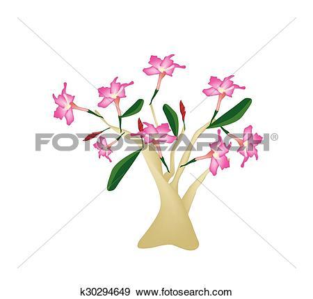 Clip Art of Desert Rose or Bignonia on White Background k30294649.