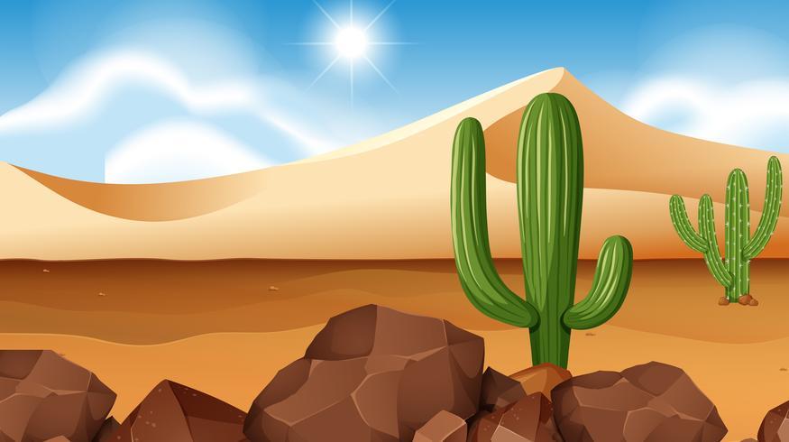 Desert scene with cactus.