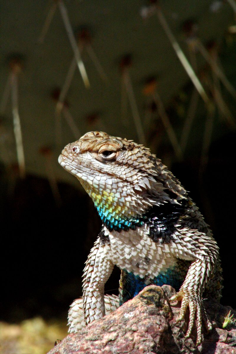 1000+ images about Lizard on Pinterest.