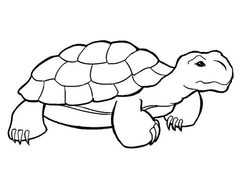Desert Tortoise Clipart.